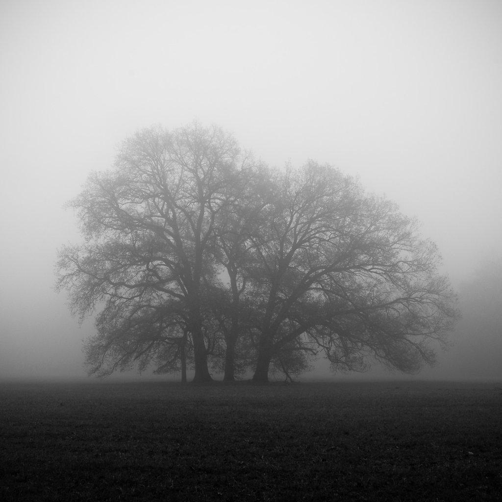 nebel-12.jpg