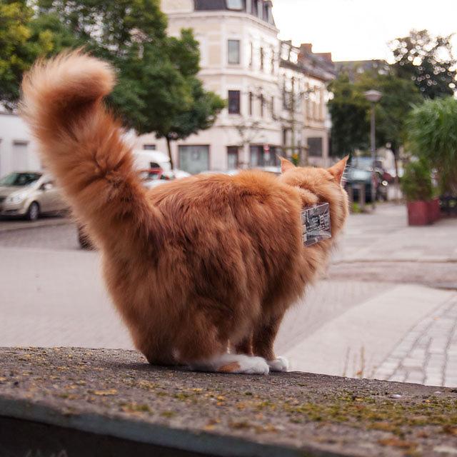 cat-exploit-00.jpg